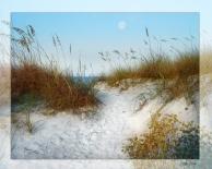 Dune in Fall