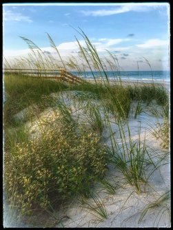 soft sea oats