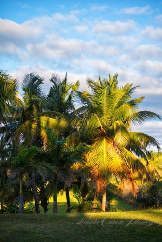 Palms in early evening
