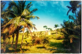 plantation grass