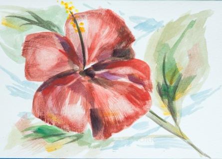 Poinsettia E