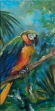 Parrot on Limb 20x10