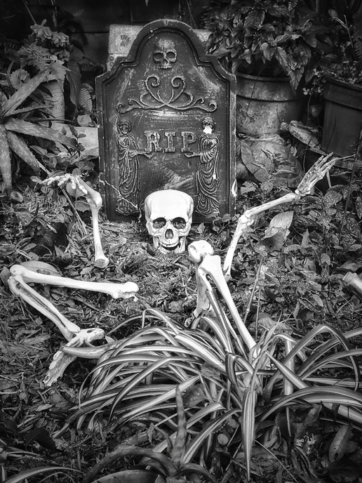 a skeleton emerges