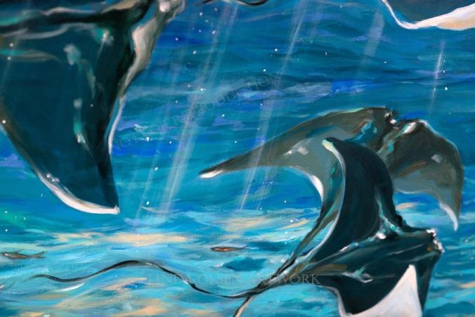 gathering rays fish